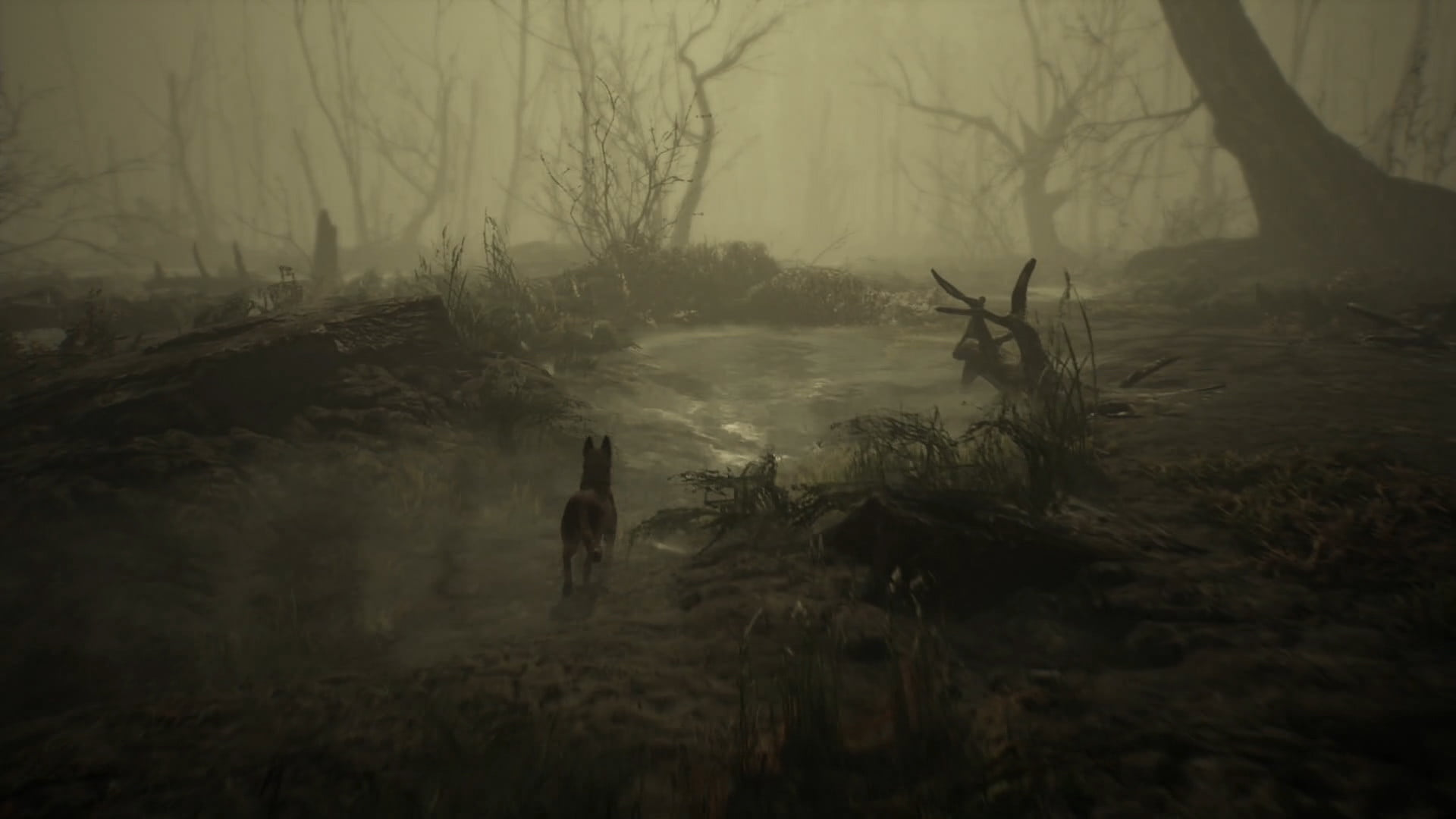 Risultati immagini per blair witch game